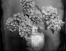 Collodion Work – Still Lifes