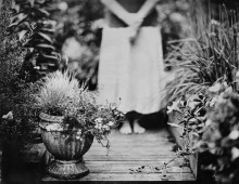 Collodion Work – The Garden